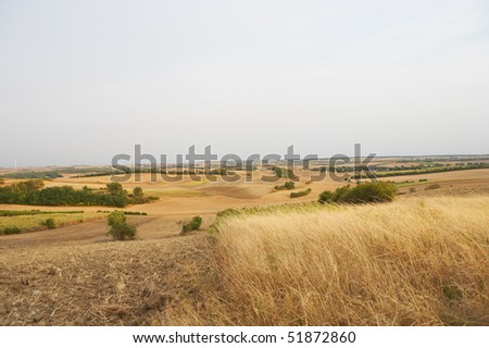 golden grainfield with scattered green bushes in the sun