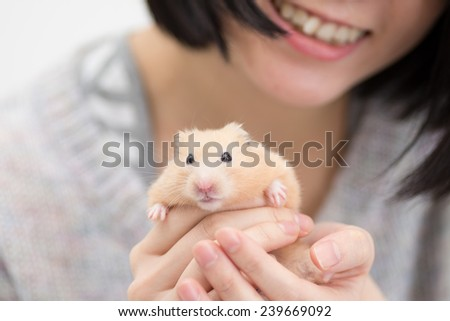 Golden Hamster in woman's hand. - stock photo