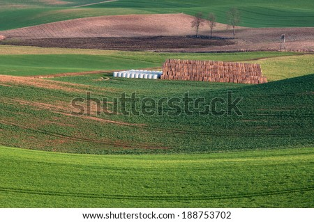 Golden hay bales harvested in the corrugated box  - stock photo