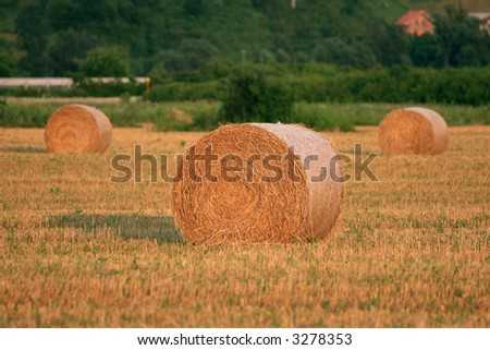 Golden hay bales in a late summer - stock photo