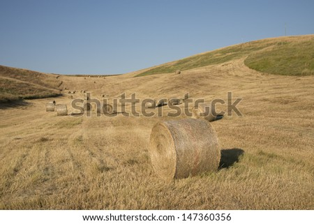 Golden Hay Bales in the tuscan countryside - stock photo