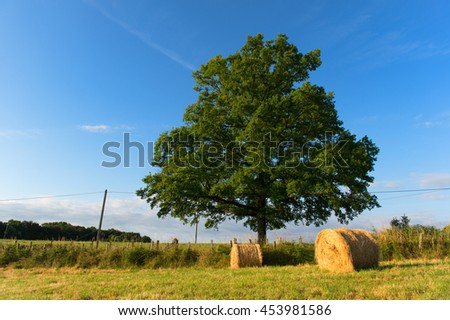 Golden hay rolls drying in the agriculture landscape in French Limousin - stock photo