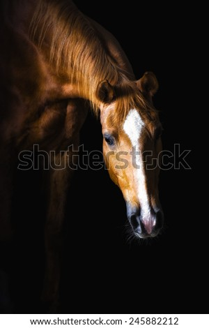 Golden horse on the black background - stock photo