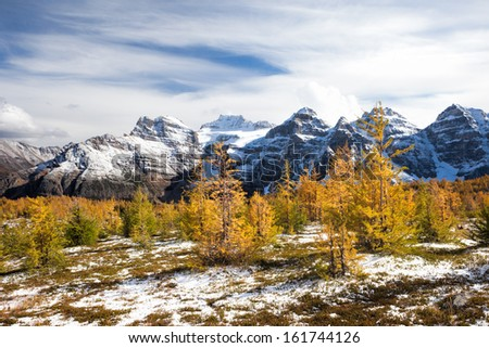 Golden Larches on High Mountains - stock photo
