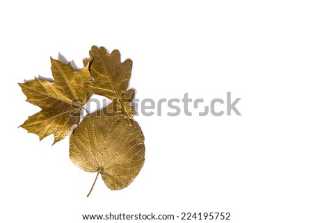 Golden leaves background isolated - stock photo