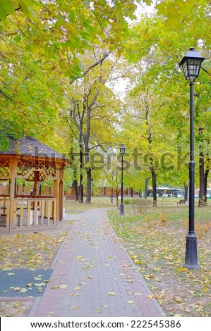 Golden leaves on branch, autumn wood in a park. Yellow fall trees. - stock photo