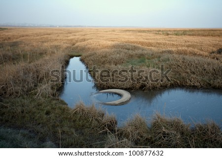 Golden Marsh land with debris  in South Wales - stock photo