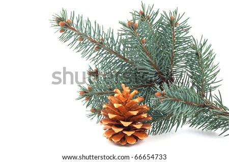 golden pinecone Christmas tree with a branch on a white background