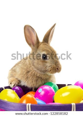 Golden rabbit with a basket of colored Easter eggs against white background. - stock photo