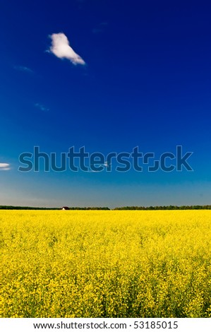 Golden rapeseed field, blue sky and small house. - stock photo
