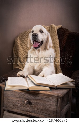 golden retriever puppy in the interior. dog fireplace