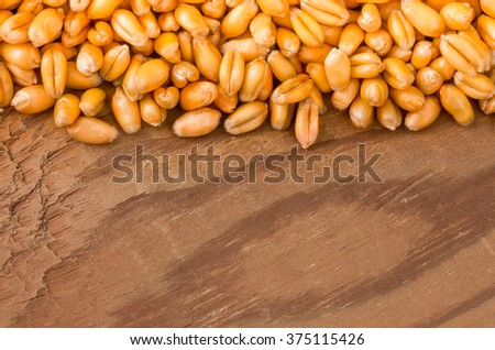 Golden ripe grain organic wheat for sowing close background - stock photo