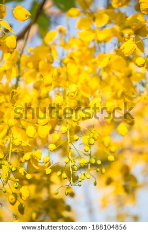 Golden shower bilder