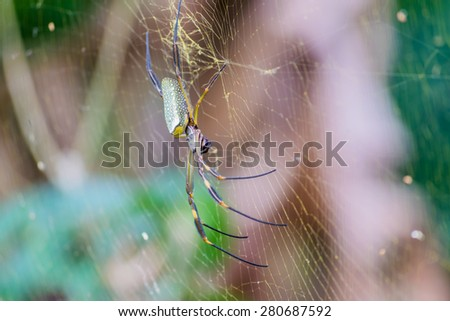 Golden silk orb-weaver spider - stock photo
