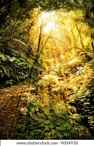 golden sunlight shining through an opening in a dense rain forest in Taiwan and a single person is walking up some old stone stairs - stock photo
