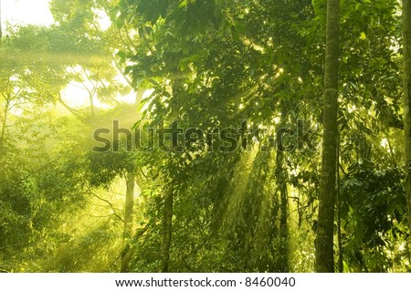 golden sunray in green forest at early morning - stock photo