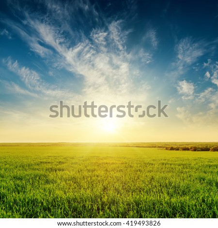 golden sunset in cloudy sky over green grass field