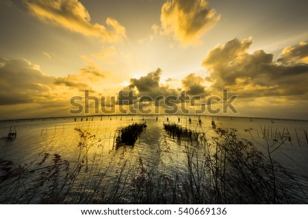 Golden sunset on the lake, silhouette fishing equipment and flowers grass