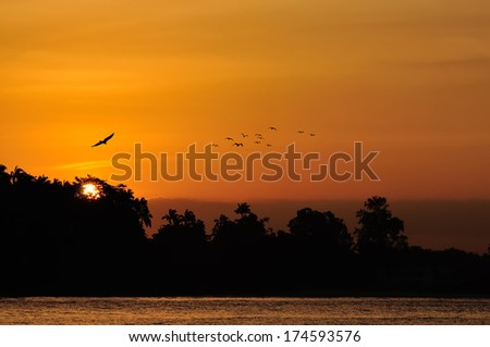Golden Sunset over sea with bird flying - stock photo