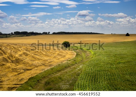 Golden wheat and green corn field with blue sky in background - stock photo