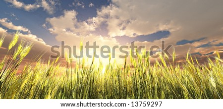 Golden wheat field - stock photo
