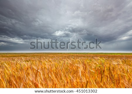 Golden wheat field against storm and lightning