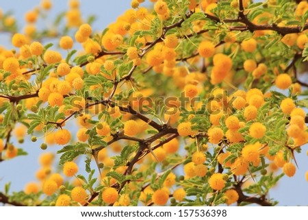 Golden yellow flowers wild flower background stock photo royalty golden yellow flowers wild flower background from africa spring season and beauty from mother mightylinksfo
