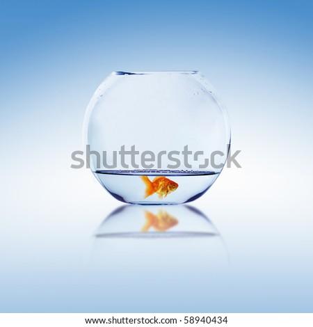 Goldfish and Aquarium. Collage. - stock photo