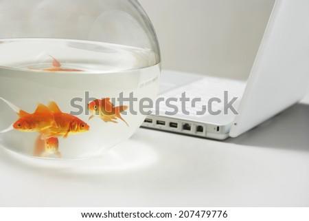 Goldfish and Laptop - stock photo