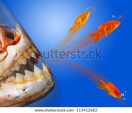 Goldfish Escaping. - stock photo
