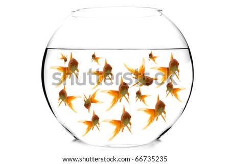 goldfish in a fishbowl on white - stock photo