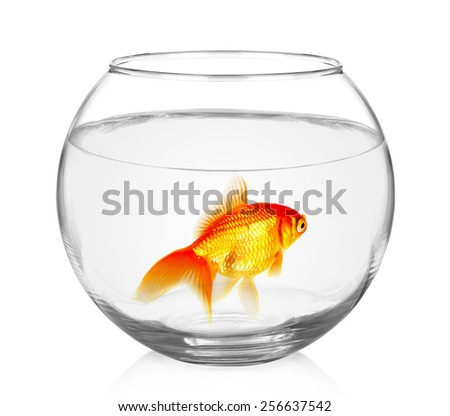Goldfish in aquarium isolated on white background.