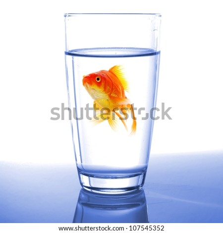 goldfish in cocktail drink glass and water showing bar flee free or jail concept - stock photo