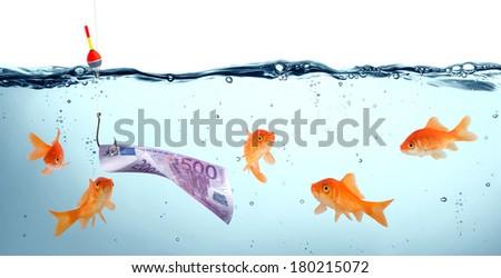 goldfish in danger - euro as bait - concept deception  - stock photo