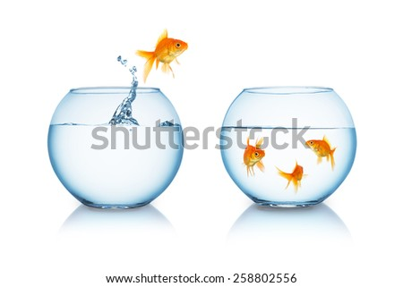 goldfish in fishbowl jumps to his friends - stock photo