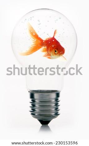 Goldfish in Light Bulb - stock photo