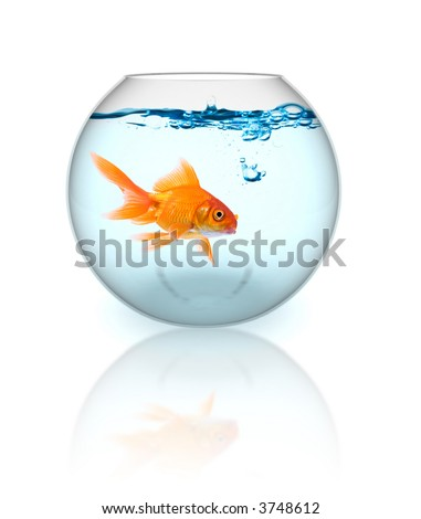Goldfish in the bowl with bubbles - stock photo