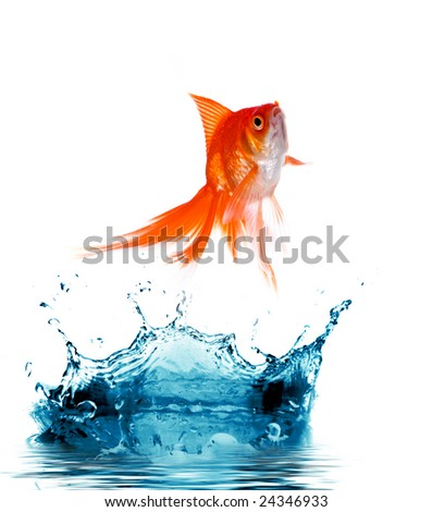 Goldfish is jumping out of  water - stock photo
