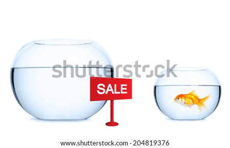Goldfish is preparing to jump into a new aquarium. Concept of real estate. - stock photo