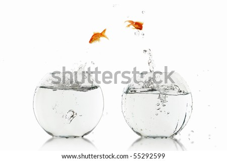 Goldfish jump into the aquarium with water. - stock photo