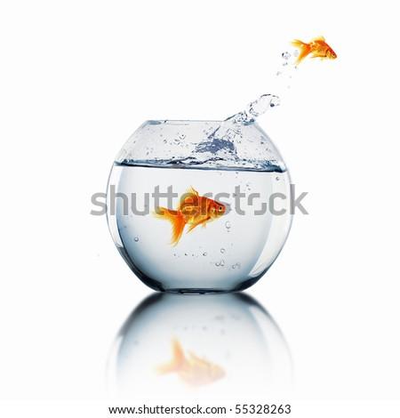 Goldfish jump into the aquarium with water. - stock photo