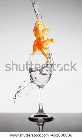 goldfish jump out of wine glass on white background - stock photo