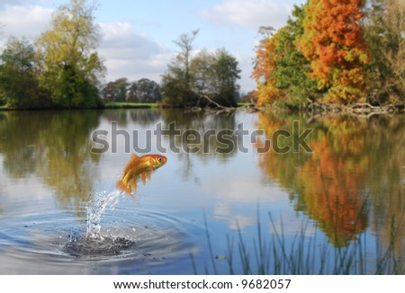 Goldfish jumping out of a calm lake in autumn - stock photo