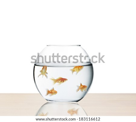 goldfish jumping out of the water  - stock photo