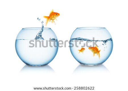 goldfish jumps out of a fishbowl to his family - stock photo