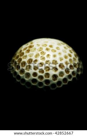 golf ball against dark background - stock photo