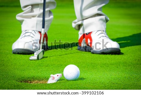 golf ball from the hole from which lurks a little white mouse, background golfer with golf club - stock photo