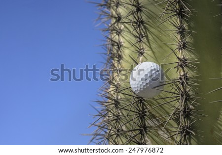 Golf ball stuck in a cactus tree after a wild swing  - stock photo
