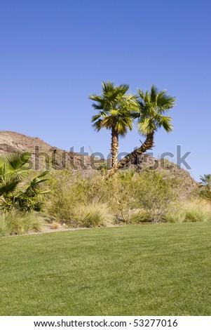 Golf course in Las Vegas - stock photo