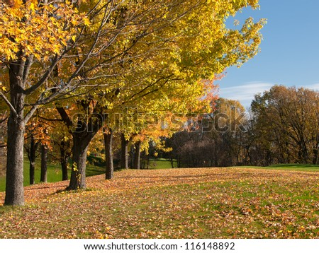 Golf in fall trees along the fairway - stock photo